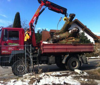 LKW mit Holz2